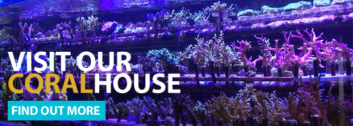 Visit our coralhouse, click here for details